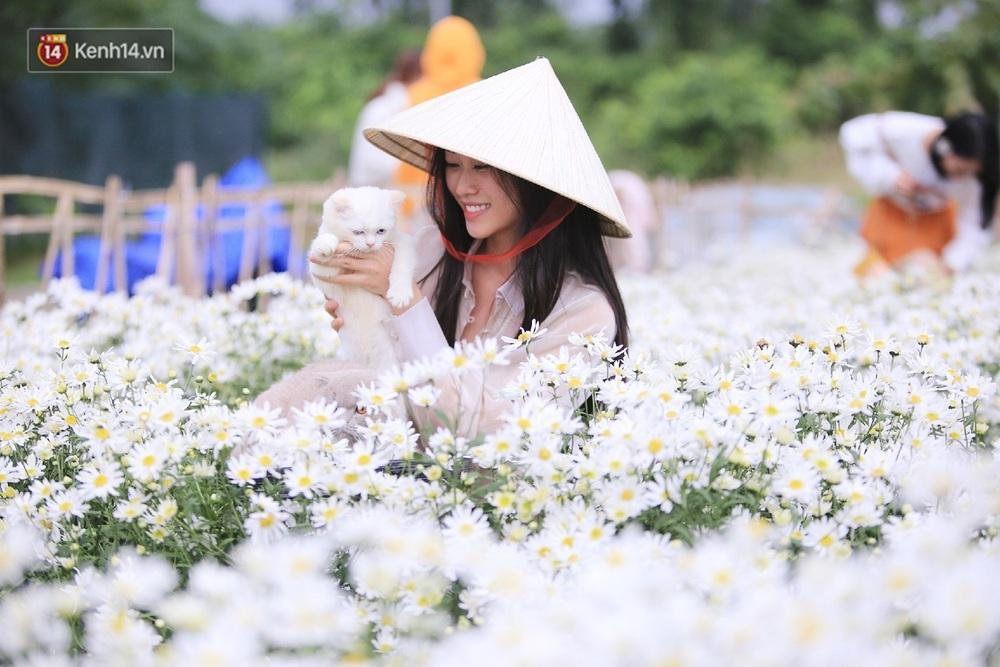 """Hàng nghìn người chen chúc """"check in"""" vườn cúc họa mi lần đầu tiên được trồng ở Đà Nẵng - Ảnh 9."""
