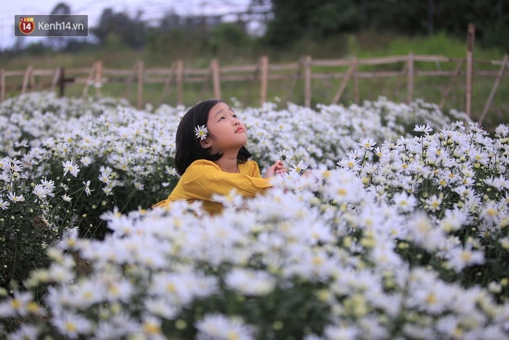 """Hàng nghìn người chen chúc """"check in"""" vườn cúc họa mi lần đầu tiên được trồng ở Đà Nẵng - Ảnh 14."""