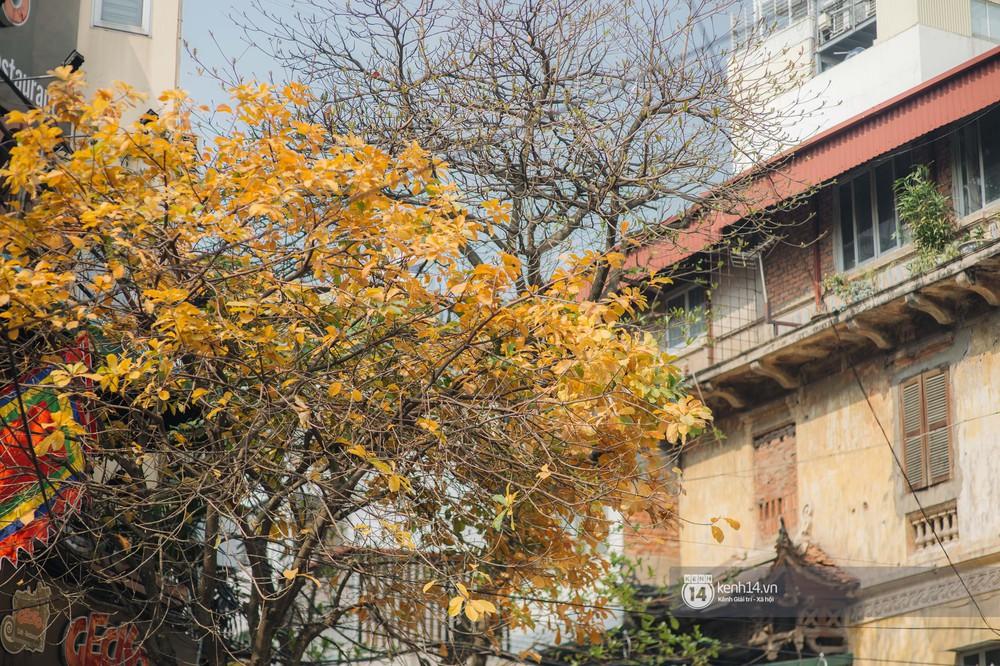 Hà Nội những ngày mùa xuân lá đỏ lá vàng: Đẹp mãi thế này thì khỏi cần đi Hàn hay Nhật luôn nhỉ? - Ảnh 5.