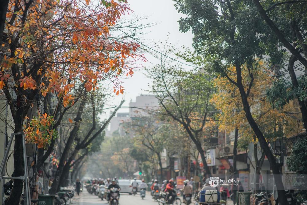 Hà Nội những ngày mùa xuân lá đỏ lá vàng: Đẹp mãi thế này thì khỏi cần đi Hàn hay Nhật luôn nhỉ? - Ảnh 2.