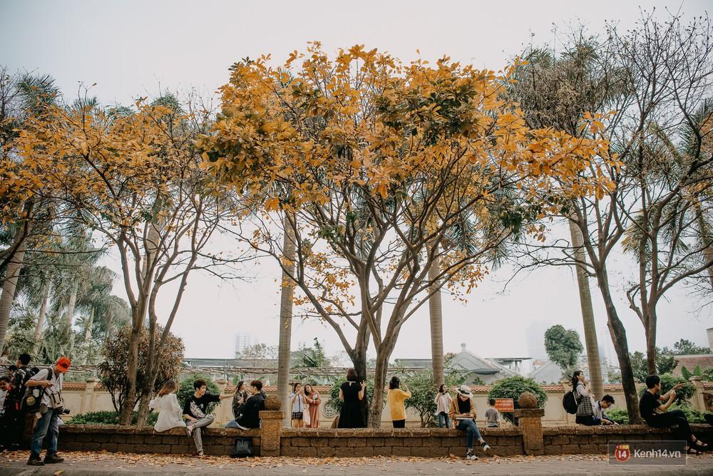 Sự thật phũ phàng tại con đường tình yêu đẹp nhất Hà Nội: Lá vàng rụng hết, người chật như nêm tranh chụp ảnh sống ảo - Ảnh 8.
