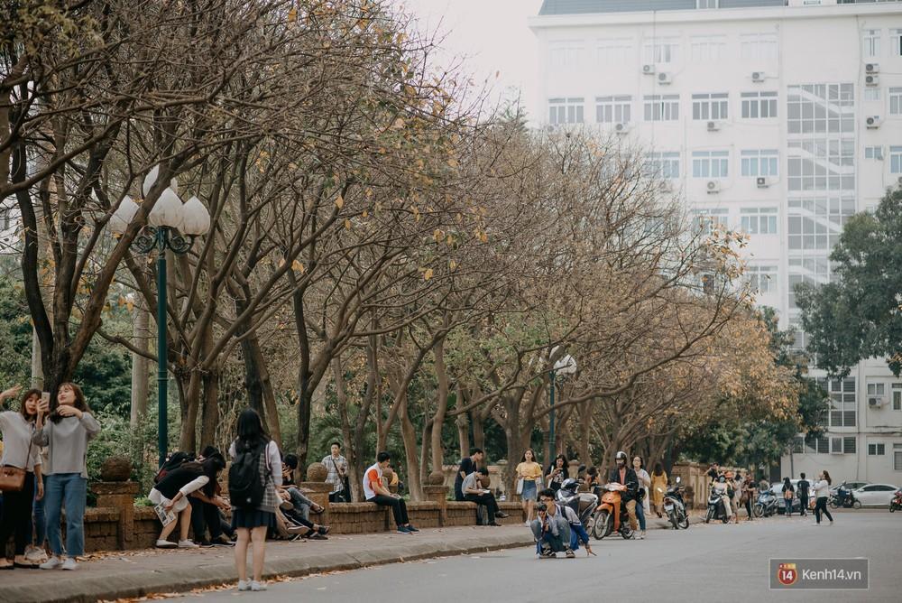 Sự thật phũ phàng tại con đường tình yêu đẹp nhất Hà Nội: Lá vàng rụng hết, người chật như nêm tranh chụp ảnh sống ảo - Ảnh 2.