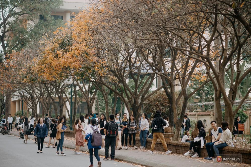 Sự thật phũ phàng tại con đường tình yêu đẹp nhất Hà Nội: Lá vàng rụng hết, người chật như nêm tranh chụp ảnh sống ảo - Ảnh 4.