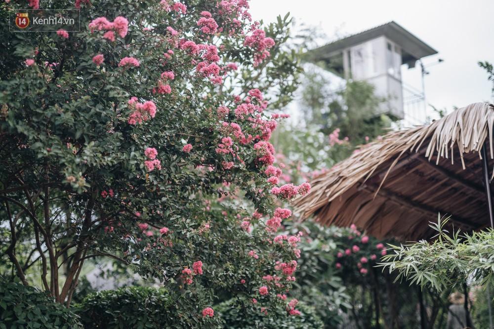 Chùm ảnh: Con đường ở Hà Nội được tạo nên bởi 100 gốc hoa tường vi đẹp như khu vườn cổ tích - Ảnh 7.