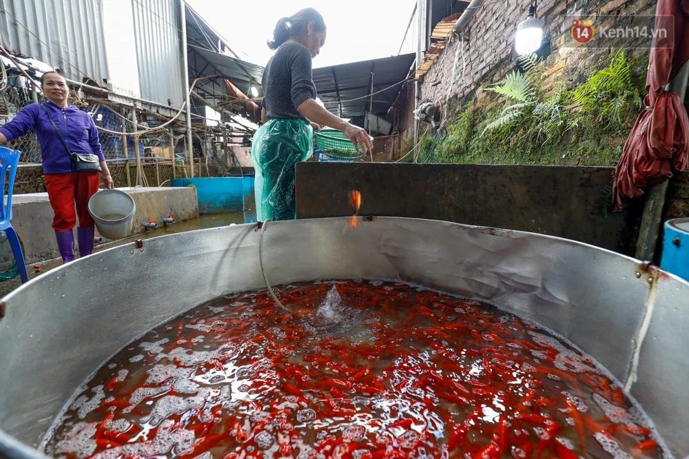 Chùm ảnh: Cá chép đỏ phục vụ lễ Ông Công Ông Táo nườm nượp đổ về chợ đầu mối - Ảnh 2.