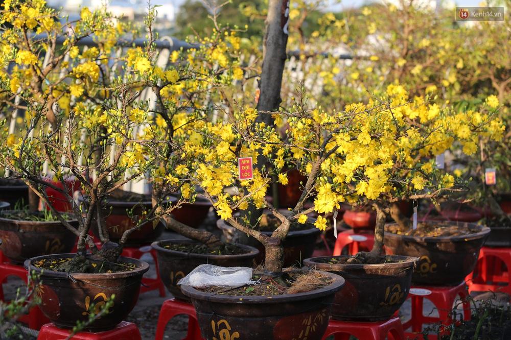 Ảnh: Thuyền chở đầy ắp hoa nối đuôi nhau cập bến Bình Đông, chợ hoa trên bến dưới thuyền rộn ràng sắc xuân ngày cận Tết - Ảnh 10.