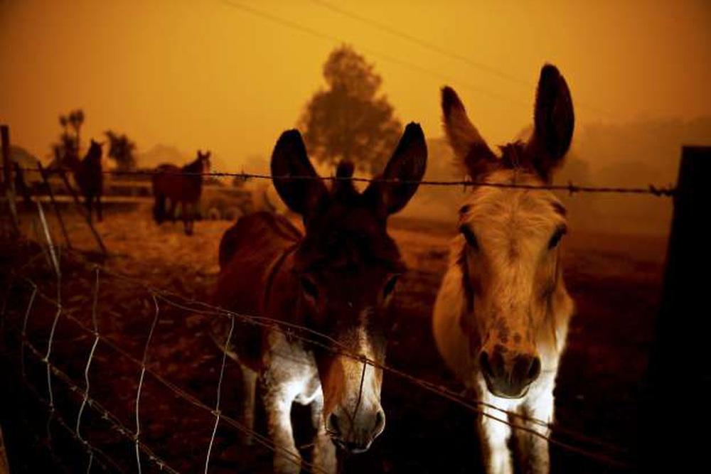 Một ngày cuối tuần chiến đấu với cháy rừng ở Úc: Khung cảnh hoang tàn trong lửa đỏ, cả con người và động vật đều phải xót xa đến rơi nước mắt - Ảnh 6.