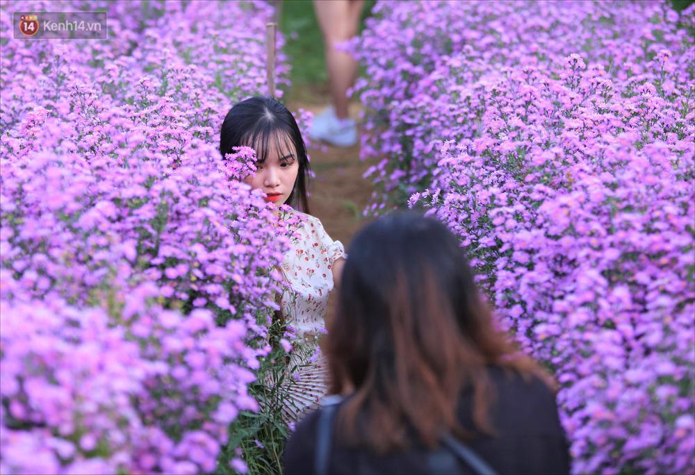 Dân tình chen chúc sống ảo tại vườn hoa thạch thảo đẹp lịm tim lần đầu được trồng ở Đà Nẵng - Ảnh 3.