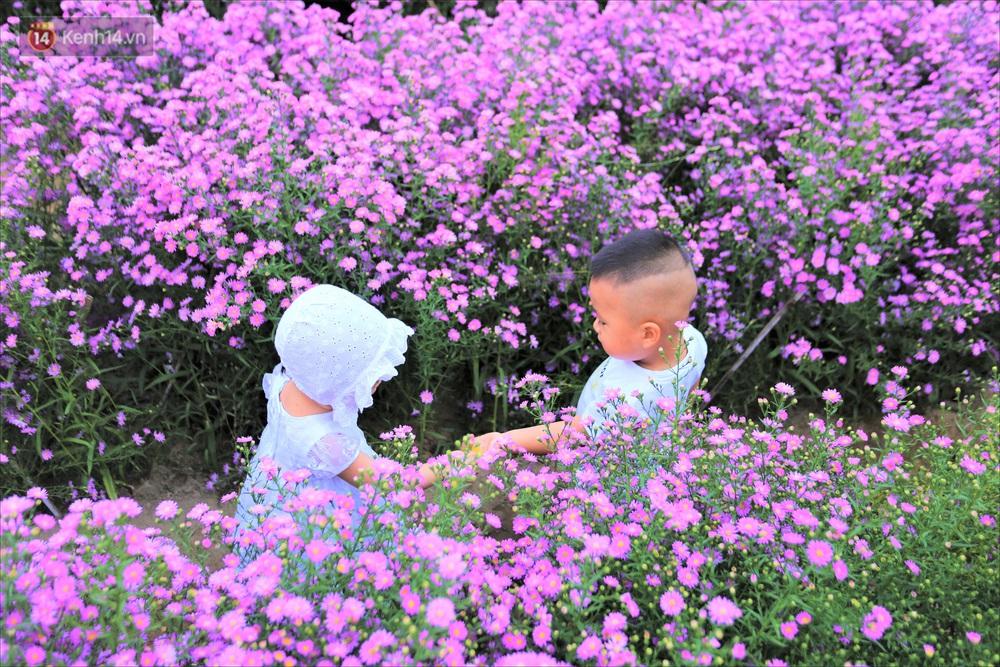 Dân tình chen chúc sống ảo tại vườn hoa thạch thảo đẹp lịm tim lần đầu được trồng ở Đà Nẵng - Ảnh 6.