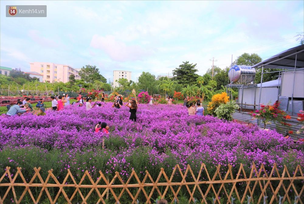 Dân tình chen chúc sống ảo tại vườn hoa thạch thảo đẹp lịm tim lần đầu được trồng ở Đà Nẵng - Ảnh 2.
