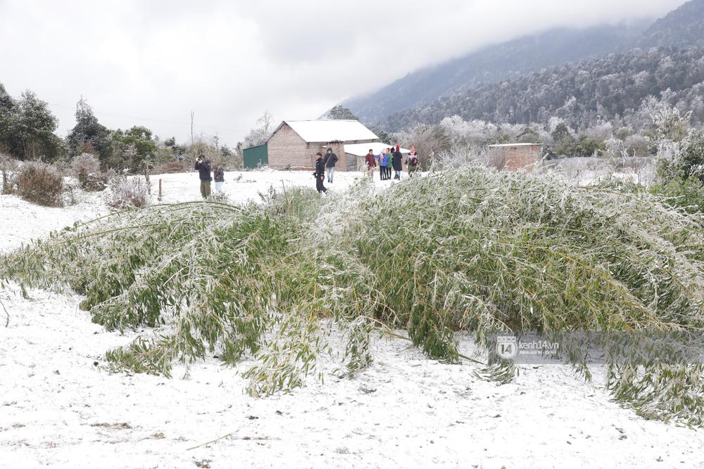 Chùm ảnh: Tuyết phủ trắng bản làng Y Tý (Sa Pa), người dân đi lại khó khăn, trẻ nhỏ háo hức nặn người tuyết - Ảnh 16.