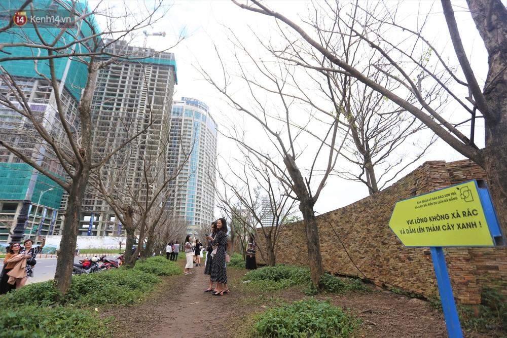 Người dân đổ xô đến check-in con đường mùa đông đẹp như trong phim Hàn ở Đà Nẵng - Ảnh 14.