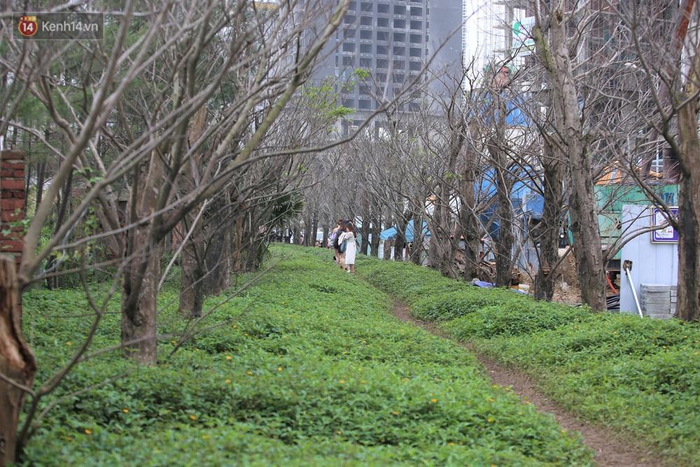 Người dân đổ xô đến check-in con đường mùa đông đẹp như trong phim Hàn ở Đà Nẵng - Ảnh 1.
