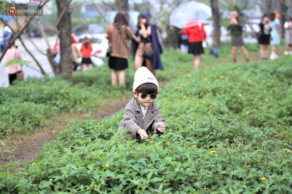 Người dân đổ xô đến check-in con đường mùa đông đẹp như trong phim Hàn ở Đà Nẵng - Ảnh 7.
