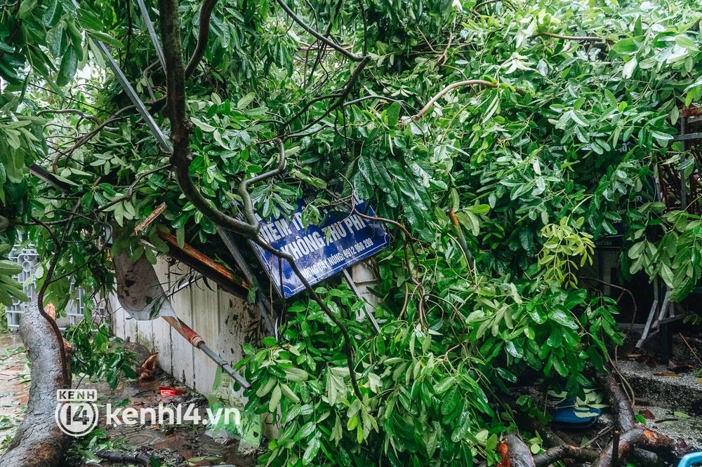 Hà Nội: Bão số 7 gây mưa lớn cả ngày, nhiều cây xanh bật gốc, đè bẹp xế hộp Camry - Ảnh 4.