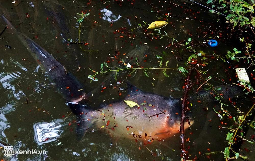 Hà Nội: Sông Tô Lịch bất ngờ chuyển màu xanh ngắt, người dân mang theo bao bắt hàng trăm cân cá đem về - Ảnh 9.