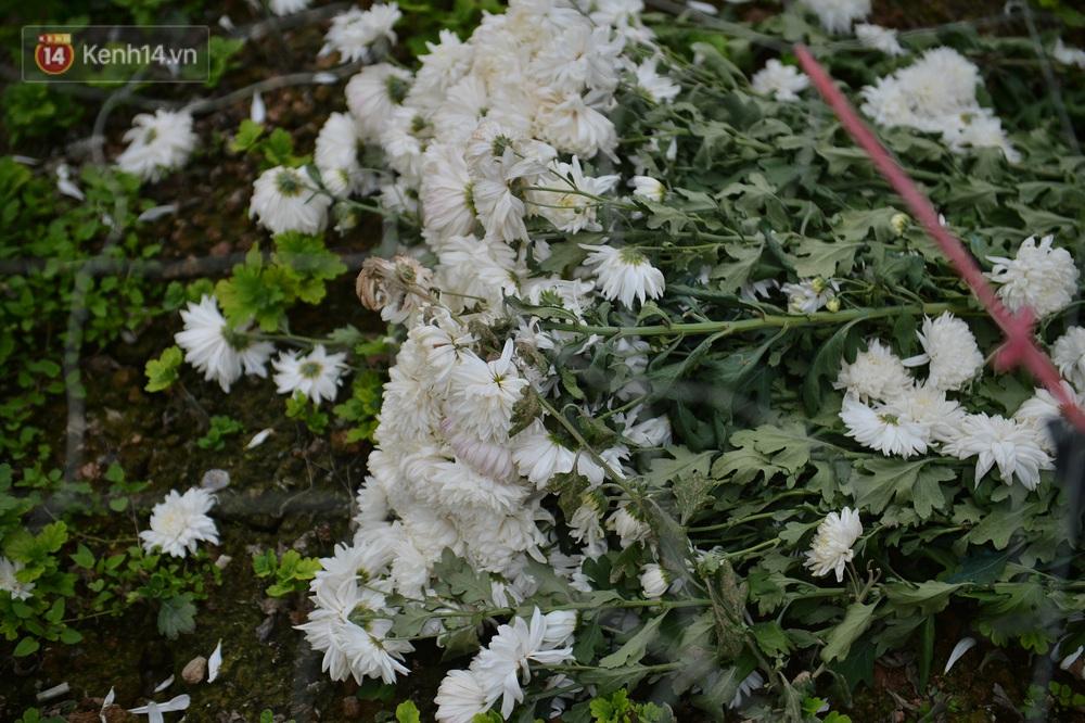 Nông dân Tây Tựu nuốt nước mắt, nhổ hoa vứt bỏ đầy đồng vì ế không bán được - Ảnh 7.