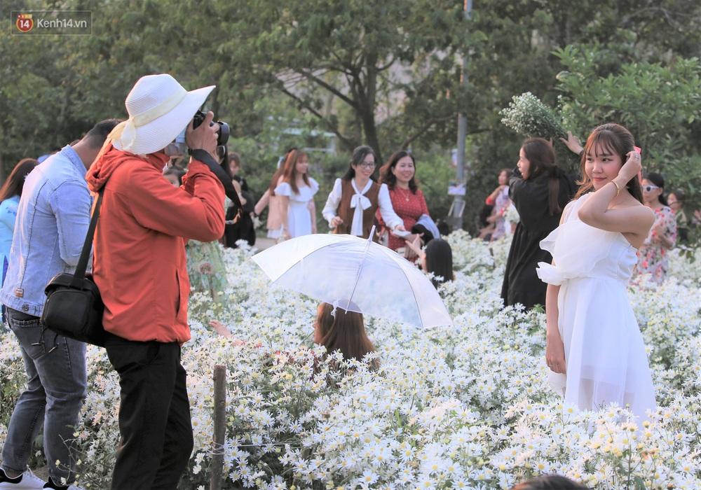 Ảnh: Vườn cúc họa mi tuyệt đẹp, mở cửa miễn phí ở Đà Nẵng thu hút hàng trăm người kéo đến - Ảnh 11.