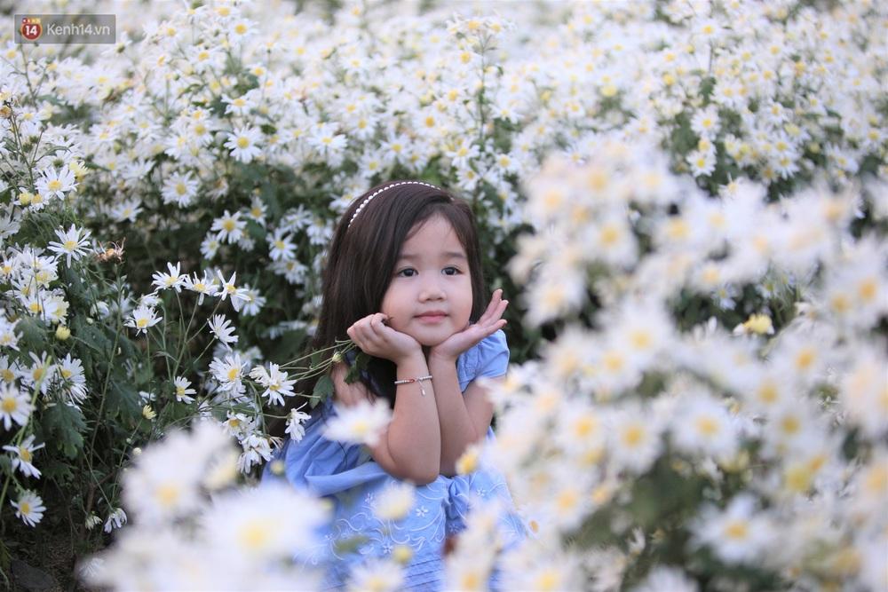 Ảnh: Vườn cúc họa mi tuyệt đẹp, mở cửa miễn phí ở Đà Nẵng thu hút hàng trăm người kéo đến - Ảnh 4.