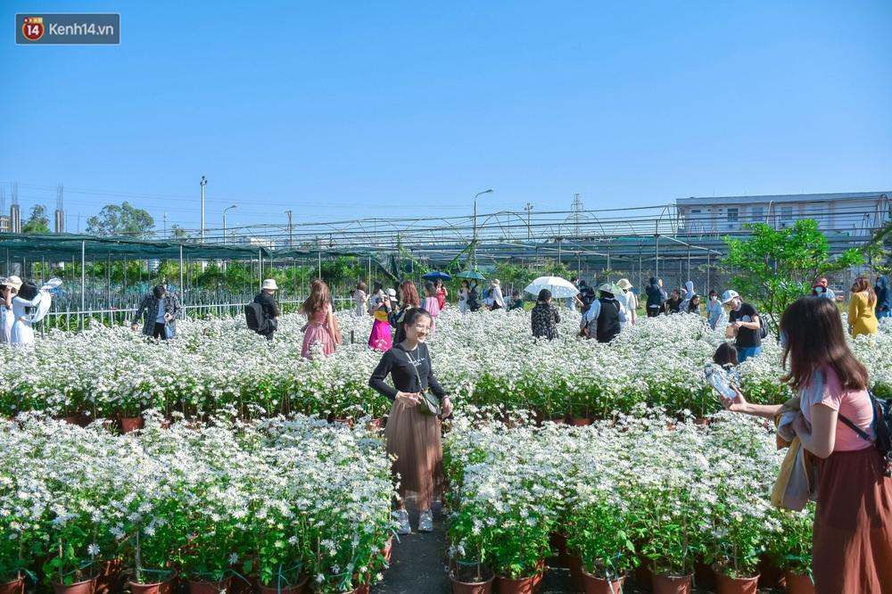 Ảnh: Vườn cúc họa mi tuyệt đẹp, mở cửa miễn phí ở Đà Nẵng thu hút hàng trăm người kéo đến - Ảnh 1.
