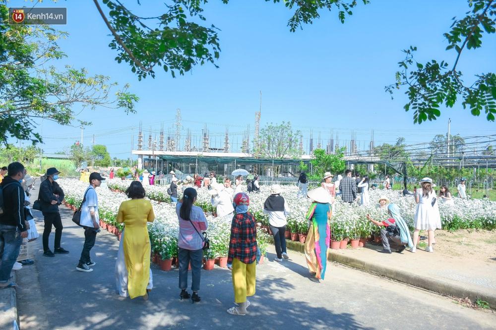 Ảnh: Vườn cúc họa mi tuyệt đẹp, mở cửa miễn phí ở Đà Nẵng thu hút hàng trăm người kéo đến - Ảnh 17.