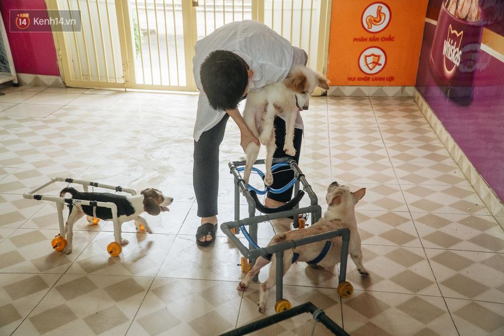 Bên trong phòng khám chữa bệnh, châm cứu miễn phí cho chó mèo ở Hà Nội: Ngoan, bà thương... - Ảnh 7.