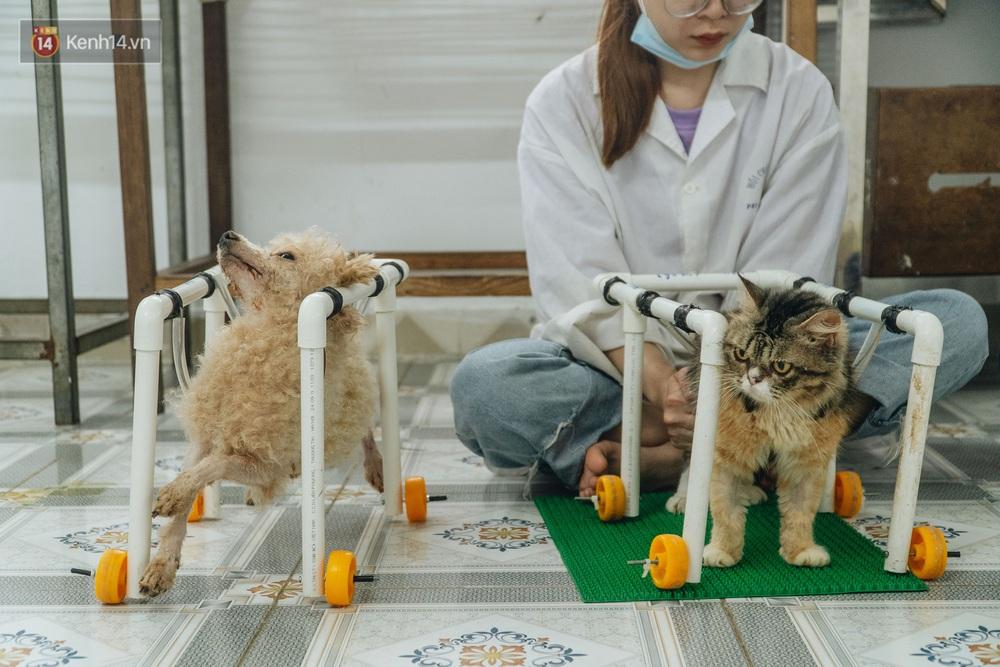 Bên trong phòng khám chữa bệnh, châm cứu miễn phí cho chó mèo ở Hà Nội: Ngoan, bà thương... - Ảnh 8.