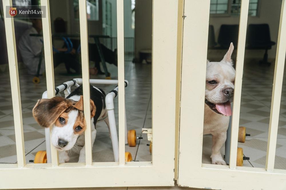 Bên trong phòng khám chữa bệnh, châm cứu miễn phí cho chó mèo ở Hà Nội: Ngoan, bà thương... - Ảnh 19.