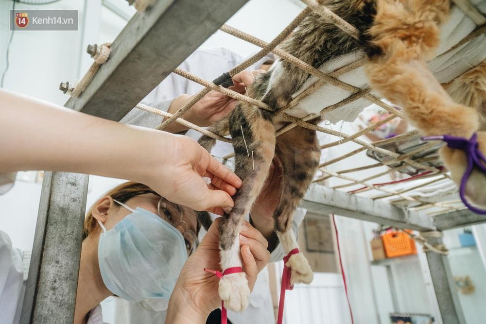 Bên trong phòng khám chữa bệnh, châm cứu miễn phí cho chó mèo ở Hà Nội: Ngoan, bà thương... - Ảnh 13.