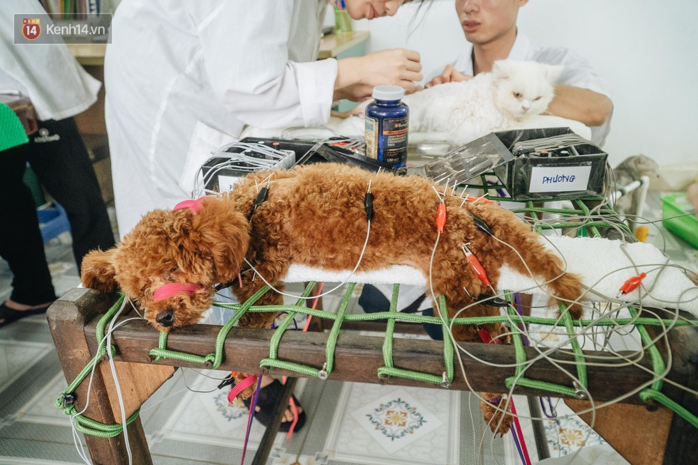 Bên trong phòng khám chữa bệnh, châm cứu miễn phí cho chó mèo ở Hà Nội: Ngoan, bà thương... - Ảnh 15.