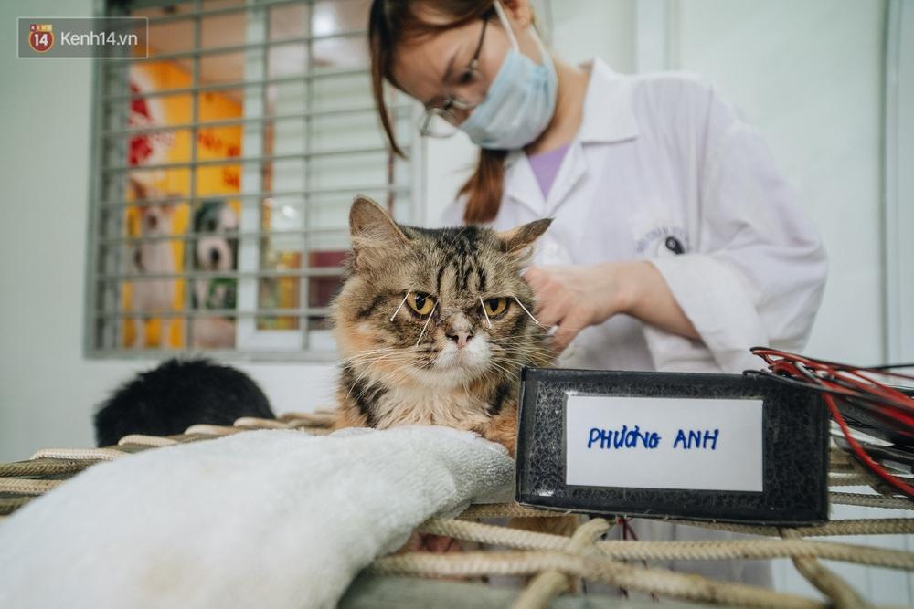 Bên trong phòng khám chữa bệnh, châm cứu miễn phí cho chó mèo ở Hà Nội: Ngoan, bà thương... - Ảnh 14.