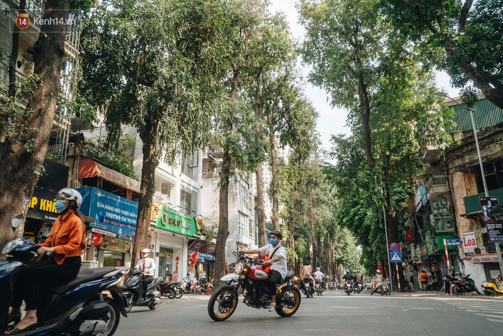 Những tuyến phố có hàng cây xanh được quy hoạch 100 năm trước ở Hà Nội giờ ra sao? - Ảnh 1.