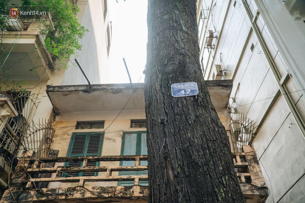 Những tuyến phố có hàng cây xanh được quy hoạch 100 năm trước ở Hà Nội giờ ra sao? - Ảnh 4.