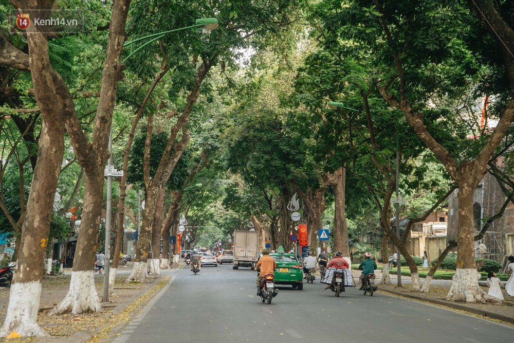 Những tuyến phố có hàng cây xanh được quy hoạch 100 năm trước ở Hà Nội giờ ra sao? - Ảnh 6.