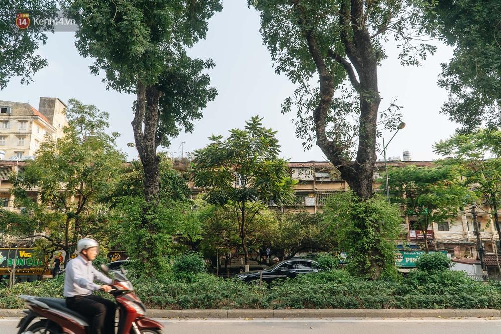 Những tuyến phố có hàng cây xanh được quy hoạch 100 năm trước ở Hà Nội giờ ra sao? - Ảnh 9.