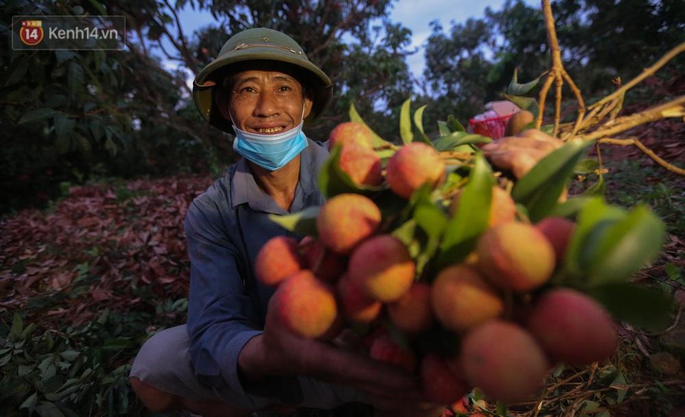 Ảnh: Người dân Bắc Giang thắp đèn từ 2 giờ sáng, đi thu hoạch vải thiều xuyên đêm - Ảnh 7.