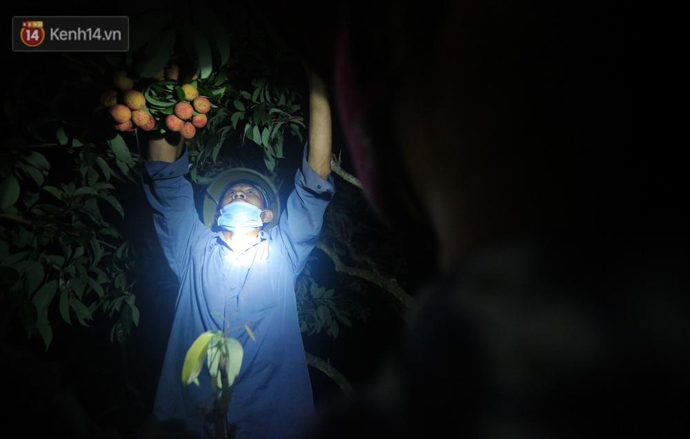 Ảnh: Người dân Bắc Giang thắp đèn từ 2 giờ sáng, đi thu hoạch vải thiều xuyên đêm - Ảnh 6.