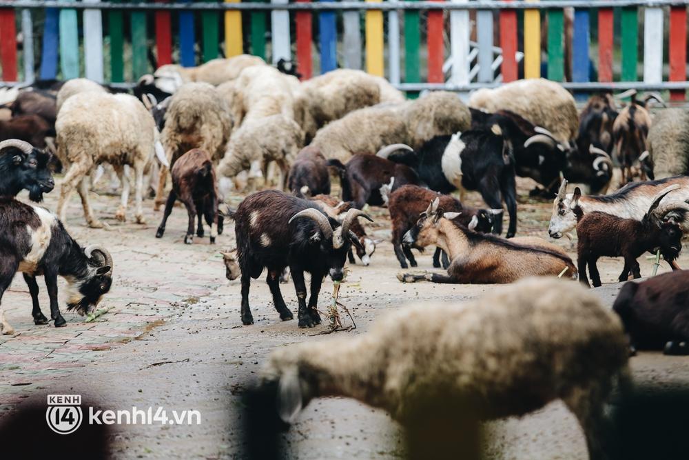 Chuyện 34 nhân viên ở lại Thảo Cầm Viên chăm sóc bầy thú giữa dịch Covid-19: Phải cố gắng không để thú nuôi bị đói - Ảnh 11.