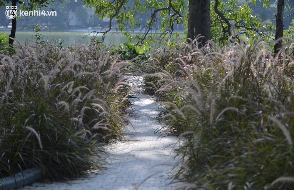 Ảnh: Hàng ghế ở hồ Gươm bị cỏ dại mọc bao quanh sau 2 tháng Hà Nội thực hiện giãn cách - Ảnh 5.