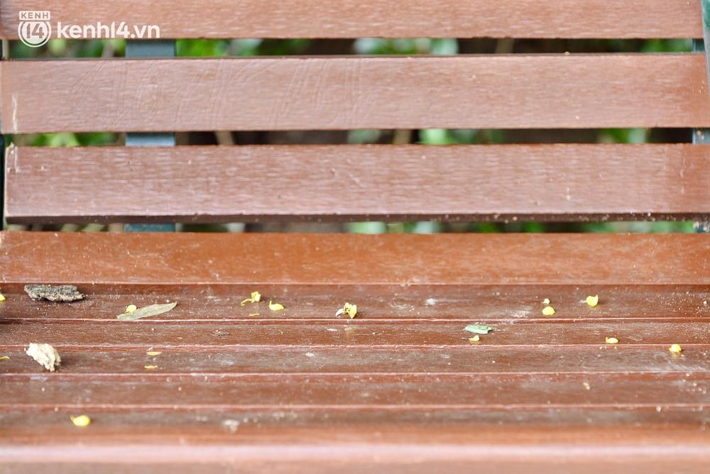 Ảnh: Hàng ghế ở hồ Gươm bị cỏ dại mọc bao quanh sau 2 tháng Hà Nội thực hiện giãn cách - Ảnh 8.