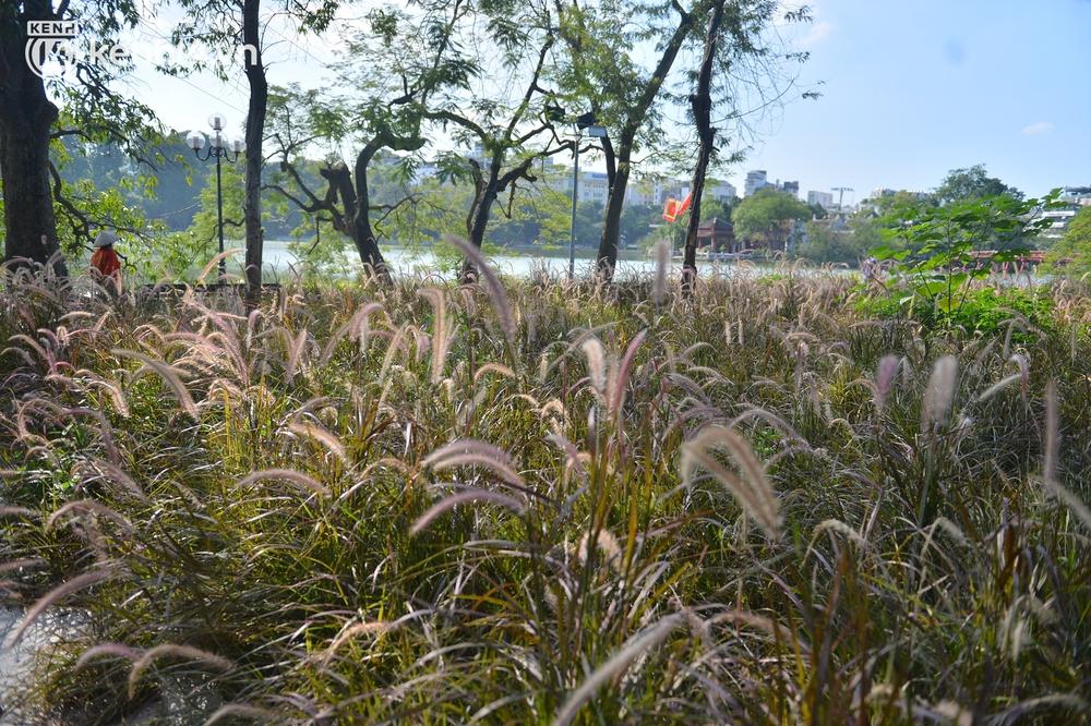 Ảnh: Hàng ghế ở hồ Gươm bị cỏ dại mọc bao quanh sau 2 tháng Hà Nội thực hiện giãn cách - Ảnh 2.