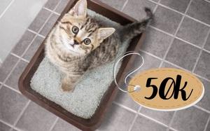 6 loại cát vệ sinh cho mèo giá chỉ từ 50k đảm bảo chuẩn ý