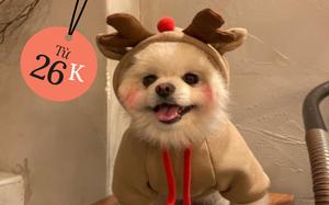 Chỉ từ 20k thả ga sắm đồ Giáng sinh cho thú cưng hòa chung không khí lễ hội