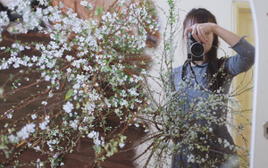 Trọn bộ bí kíp chơi tuyết mai rừng đẹp mê suốt 1 tháng: Ai muốn có hoa rẻ - đẹp - bền Tết này nên thuộc lòng