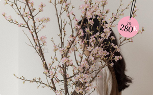 Hoa chơi Tết: Sakura Nhật được hội sành điệu mê tít, giá cao nhưng vẫn lọt top hoa siêu hot