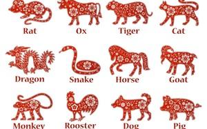 Năm Tân Sửu, 12 con giáp nên mua đồ màu gì để tấn tài tấn lộc, vui vầy cả năm?