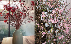 Sao Việt khoe cây hoa chơi Tết: Tóc Tiên, Bảo Anh mê đào, thanh liễu; Thanh Hằng lại là fan của tuyết mai