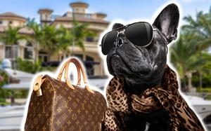 Dịch vụ sang chảnh chỉ chó mèo nhà giàu mới được hưởng: Ăn 300k/bữa, ở khách sạn 5 triệu/đêm