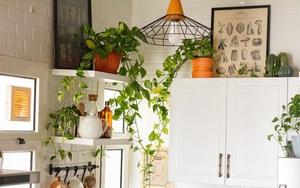 7 loại cây xinh xắn dễ chăm nên trồng trong bếp: Cây thanh lọc không khí, cây làm gia vị cực