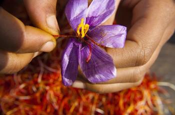 Nhụy hoa nghệ tây - Saffron có thật sự thần thánh không mà chị em nào cũng rủ nhau mua về làm đẹp? - Ảnh 3.